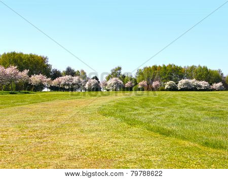 Apple Trees On Golf Course