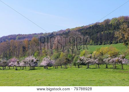 Landscaped Field And Apple Trees
