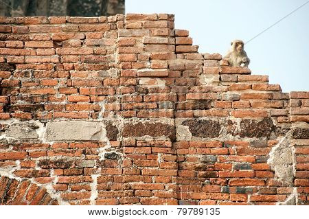 Monkey sitting on Ancieng wall In Phra Prang Sam Yod Temple,Thailand.