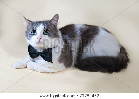 White Cat With Spots In Bow Tie Lying On Yellow