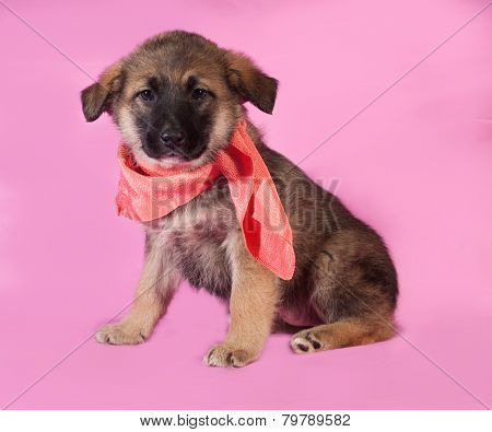 Brown Puppy In Orange Bandanna Sitting On Pink