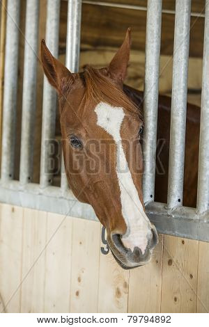 Horse resting in his stall