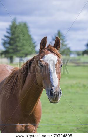 Handsome horse looking over fence