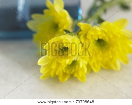 yellow flower in front of the toner dispencer