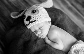 stock photo of baby dog  - cute newborn baby sleeps in a knitted hat dogs  - JPG