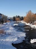 stock photo of cottonwood  - Yampa River and cottonwoods in winter Steamboat Springs Colorado - JPG