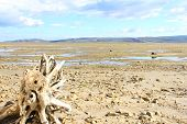 picture of arctic landscape  - Summer arctic landscape with lake mountains and dry tree root - JPG