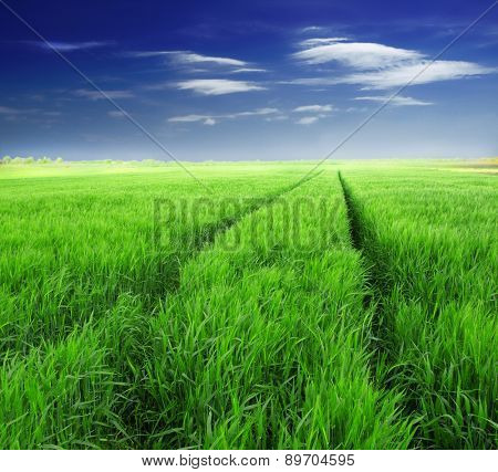 Summer landscape with sky and green herb