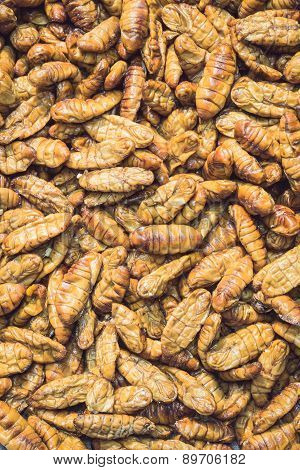Silkworm Pupae Pattern For Background Used