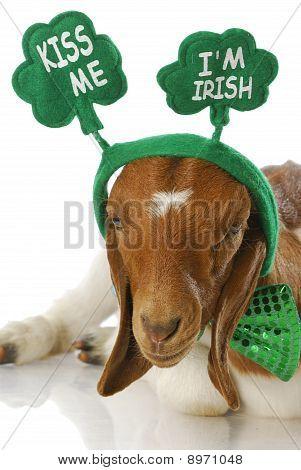 St Patricks Day Goat