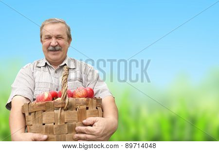 Senior man, harvesting an apples