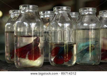 YOGYAKARTA, INDONESIA - JULY 31, 2011: Aquarium fishes on sale at the Pasar Ngasem Market in Yogyakarta, Central Java, Indonesia.