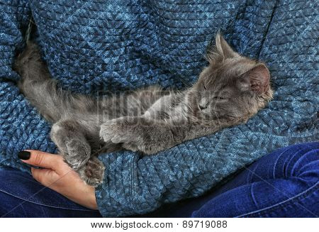Cute gray kitten in hands close-up