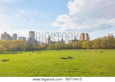 New York central park at sunny day