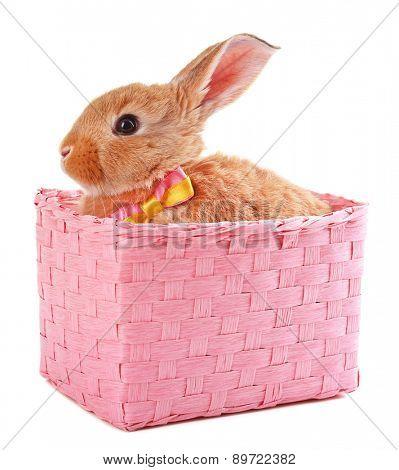 Little rabbit in wicker basket isolated on white