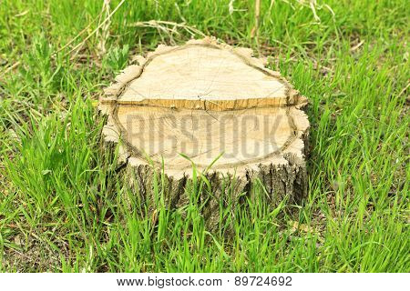Tree stump close-up