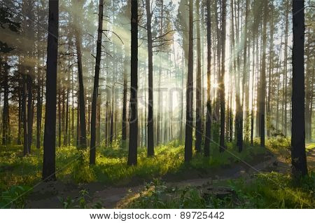 sunset in the forest, vector