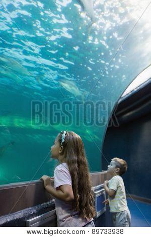 Little siblings looking at fish tank at the aquarium