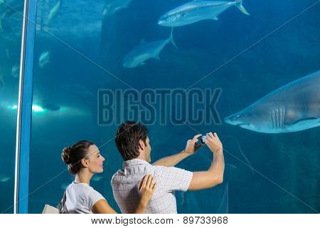 Couple taking photo of shark at the aquarium
