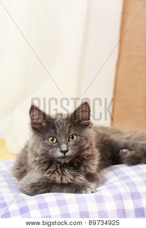 Cute gray kitten on pillow at home