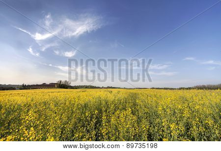 Canola field over italian hills