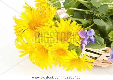 Coltsfoot With Violets In A Basket