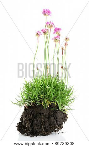 Beautiful flowers with green grass and ground isolated on white