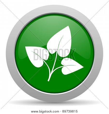 leaf green glossy web icon