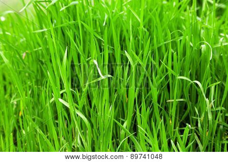 Green grass outdoors