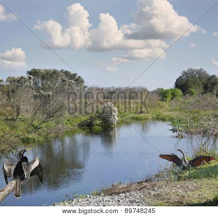 Florida Wetlands Against Blue Sky