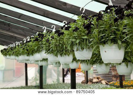 Hanged Flowers