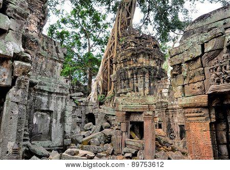 Ancient Temple Ta Prohm Angkor Wat Cambodia