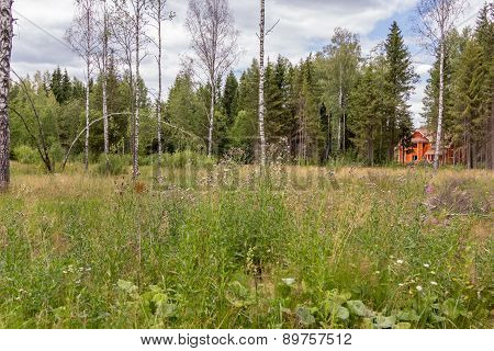 Lone Log Cabin On The Edge Of Forest Clearing