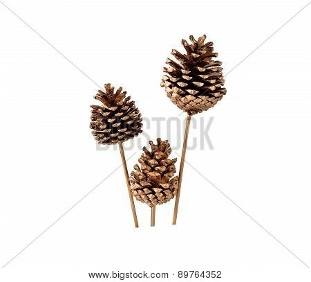 Various Conifer Cones Isolated On White background