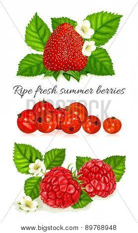 Fresh ripe summer berries. Vector illustration