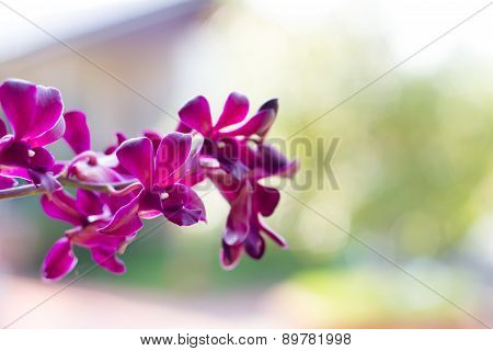 Orchid Flowers On Bright Summer Day