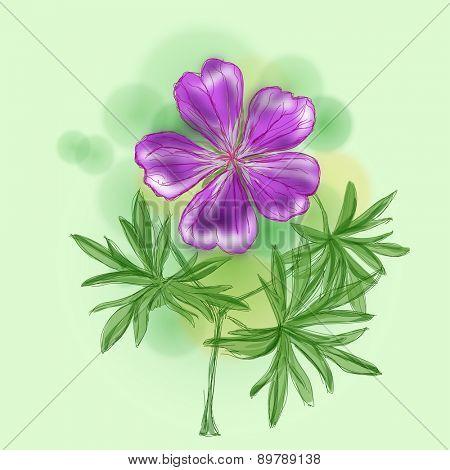 Flower - Meadow Geranium (Geranium Pratense)