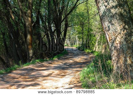 road on the forest