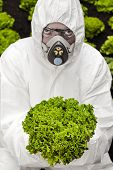 pic of genetic engineering  - Genetic modification Man in protective white suit holding a modified lettuce