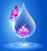 picture of water lily  - Water drop and lily - JPG