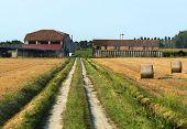 picture of ferrara  - Country landscape near Ferrara  - JPG