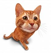 image of kitty  - Happy cat on a white background as a cute orange tabby kitty with a smile in forced perspective as a symbol of pet care or veterinary health - JPG