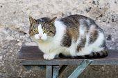 foto of domestic cat  - Cat outdoor portrait - JPG