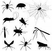 stock photo of creepy crawlies  - A large collection of various creepy crawly insects - JPG
