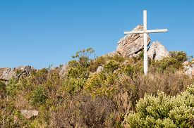 picture of fynbos  - Cross between fynbos plants at the top of Sir Lowrys Pass - JPG