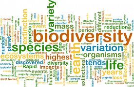 image of biodiversity  - Background text pattern concept wordcloud illustration of biodiversity - JPG