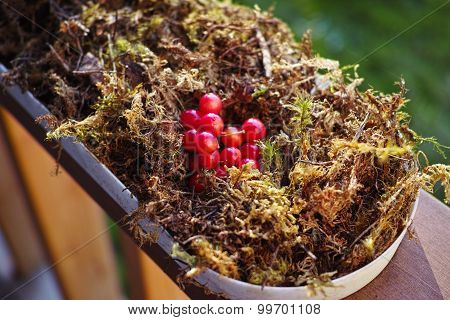 Wedding decor of moss and forest berries
