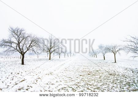 Winter trees on a snowy day