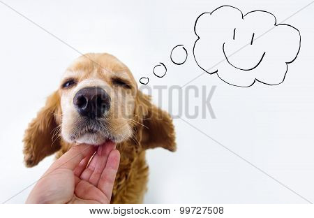 Cute English Cocker Spaniel puppy and petting hand in front of a white background with comic style s