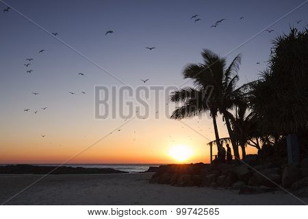 Sunrise with seagulls at Snapper Rocks